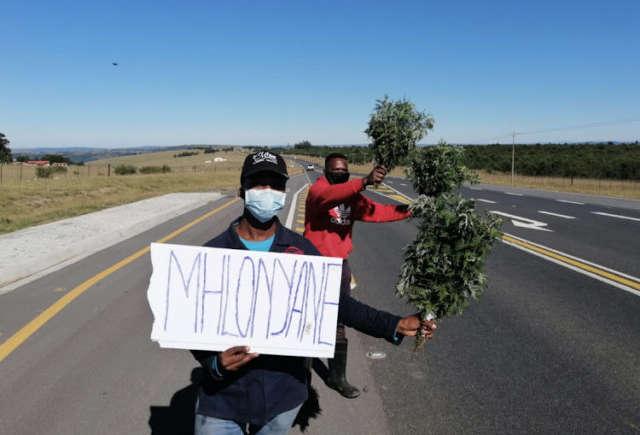 Umhlonyane Plant Health Benefits